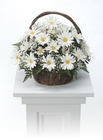 Daisy basket arrangement from The Posie Shoppe in Prineville, OR