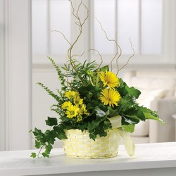 Sunny yellow dish garden planter from The Posie Shoppe in Prineville, OR