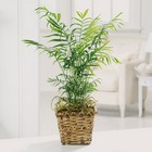 Paradise palm plant from The Posie Shoppe in Prineville, OR