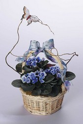 African violet basket from The Posie Shoppe in Prineville, OR