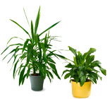 Designer's Choice Green or Blooming Plant from The Posie Shoppe in Prineville, OR