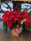 Poinsettia plant from The Posie Shoppe in Prineville, OR